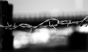 Barbwire by hmdll