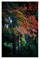 Fall in the Queens Garden 2 by Moonbird9