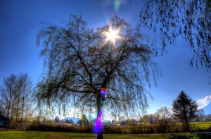 Tree sun HDR by jverm