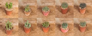 My Cactus Part 1 by Thanutpat