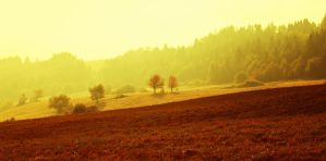Autumn morning by mirop