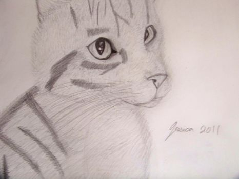 Tabby by whimsicalworkings