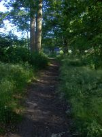 woods path by whoosh-stock