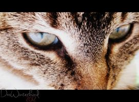 wild eyes by Thavia