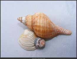 Unrestricted Object Stock - Sea Shell 11 by shelldevil