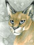 ACEO Caracal by Pholcidae