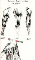 Pressure Points - Anamtomical Sketch by ONeillMartialArt
