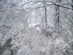 Forest Path in Winter 8 by Martut