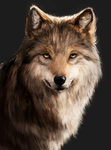 Wolf painting practise by Ketunleipaa