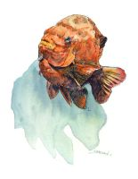 Fish watercolor by sheldonsartacademy