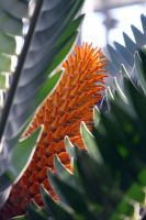 Wood's Cycad by CASPER1830