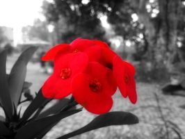 Selective Colour by damaihulu