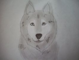 First Wolf attempt from me by Camaru