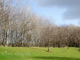 Leafless trees by Kirsty2010dodgs