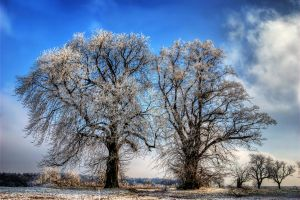 Frozen Trees II by stg123