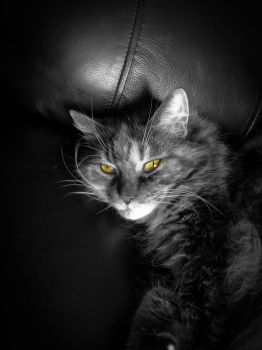 A cat named holly by Johnt447