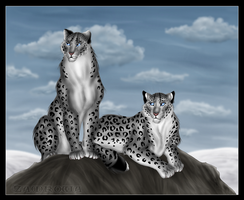 Snow Leopards by Zamkowa