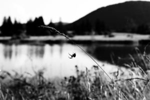 Spider, Lake and Volcano by KIP-K