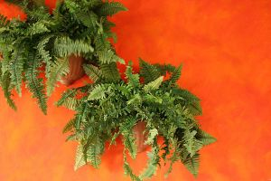 Plants I by KW-stock