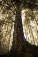 Birnam Woods In November 4 by tamaskatai