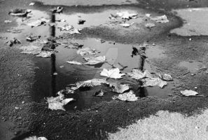 Puddle by LJNPhotography