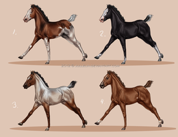 Rosendal Thoroughbred Foal Auction- Winners by Jullelin