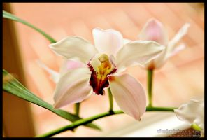 orchids2 by delobbo