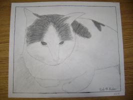 Gandalf my cat by cute-but-confused