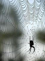 'Spider and Morning Dew' by Suensyan