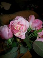 Pink Roses 002 by DominosAreFalling