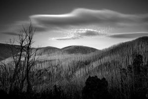 Gums of Grey by MarkLucey