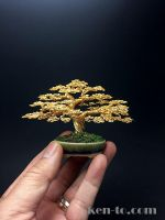 Gold wire bonsai tree by Ken To by KenToArt