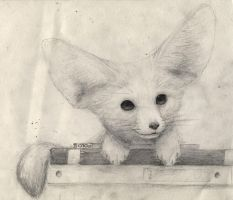 Fennec on my books by trigs94