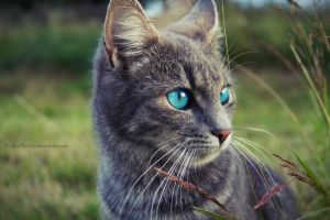 Ice blue eyes by MichisArt
