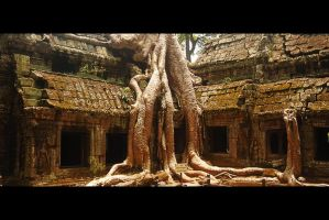 Ta Prohm - Tomb Raider by iceconyelo