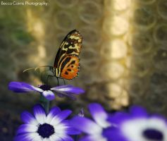 Butterfly by BeccaTheDuck
