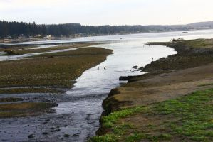 An estuary is where fresh water meets w/salt water by ExposeTheBeauty