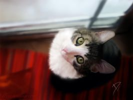 my cat by depyy