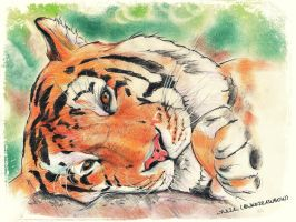 My love Tiger!! by UkkiRainbow