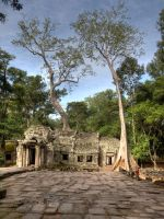 Ta prohm - 3 by Runfox