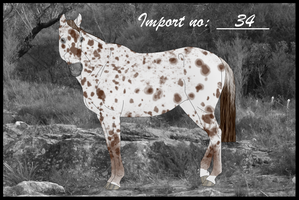 Import 34 by Orstrix