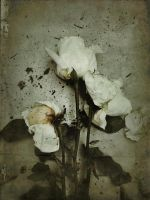 iPhoneography,    Ghost of a Rose by Gerald-Bostock