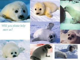 Help Save the Seals by Cara-Doughnut-Lady