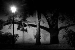 The lamp, the tree and its shadow by dbroglin