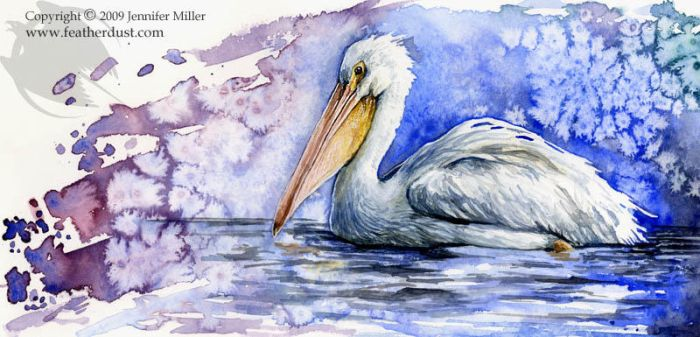 American White Pelican by Nambroth