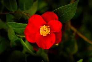 Red Flower by Palanteer