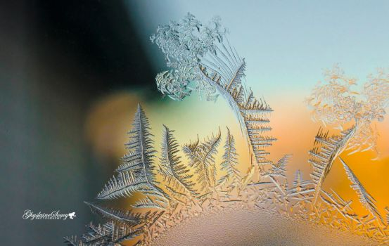 Frost Trees And Ferns by gigi50