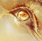 Eyes of Gold by Death-Summoner