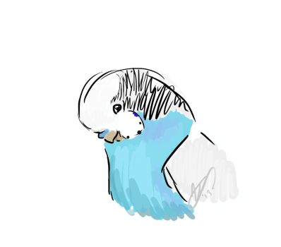 Budgie Doodle by glasstriangles