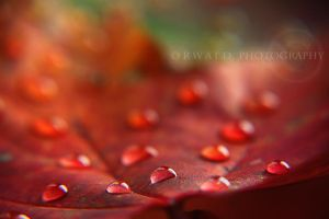 fiery tears by Orwald